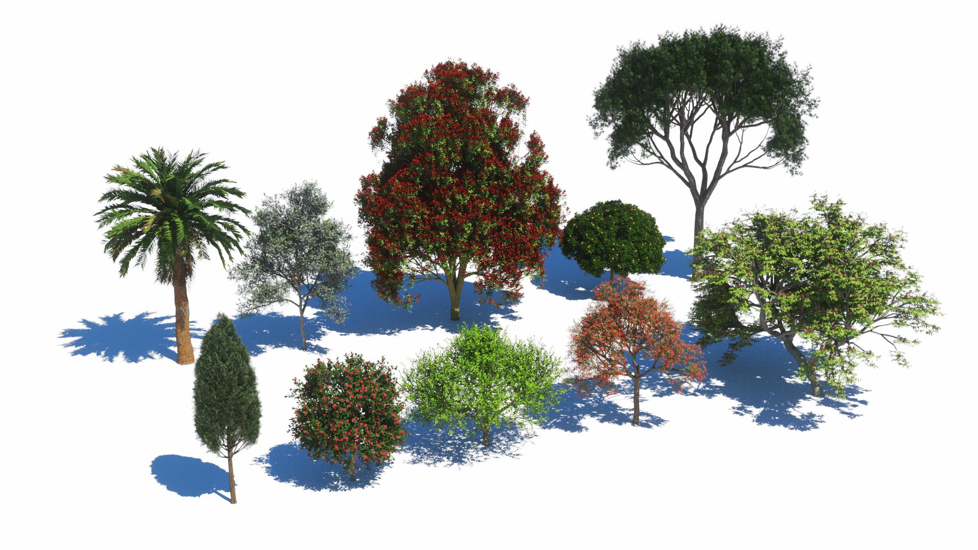 Plants Kit 4