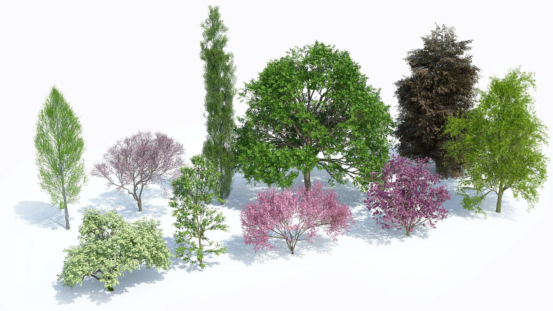 Plants Kit 6