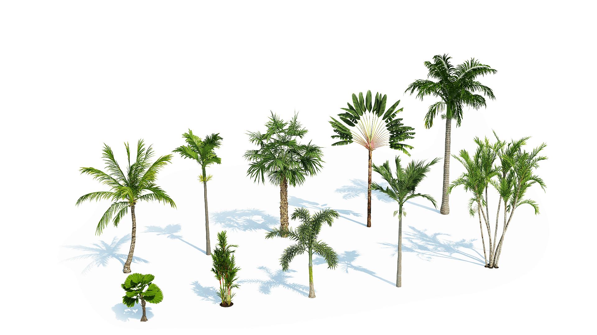 Plants Kit 7