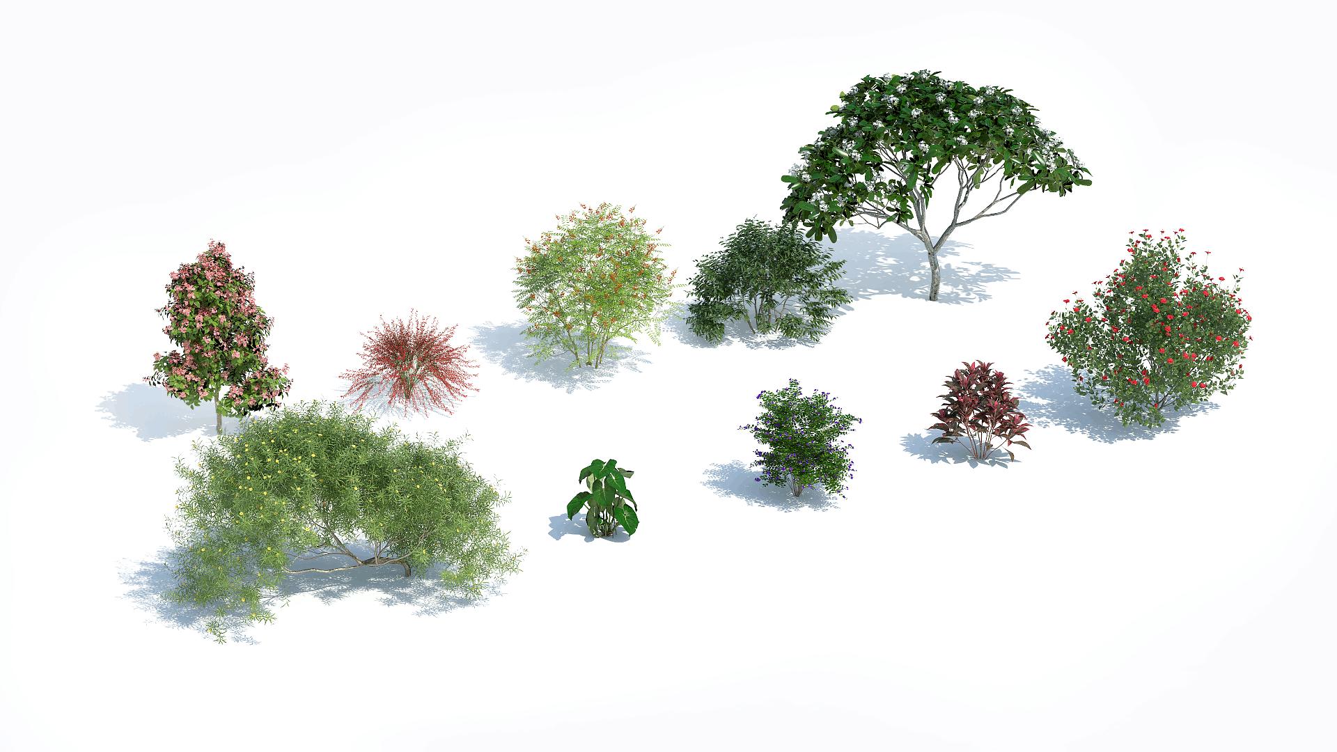Plants Kit 11